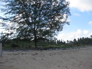 ที่ดินเปล่า ด้านหน้าติดทะเล ด้านหลังติดถนน 100 ตร.วา เหมาะสำหรับการพักผ่อน อ.หลังสวน จ.ชุมพร 5 แสน 2