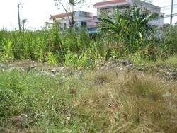 ขาย ที่ดิน ย่าน ทุ่งครุ ประชาอุทิศ กรุงเทพ 61 ตร.วา ใกล้ หมู่บ้าน พฤกษ์ลดา ประชาอุทิศ เพียง 8 แสน