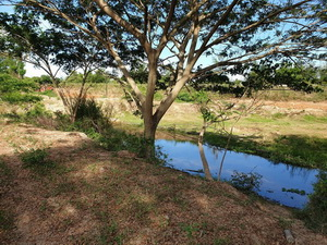 ขาย ที่ดินเปล่า ติดคลอง ใกล้ฝายกั้นน้ำ มีเสียงน้ำไหล เหมาะกับการสร้างบ้านสวน พักอาศัย อ.ปราณบุรี 2