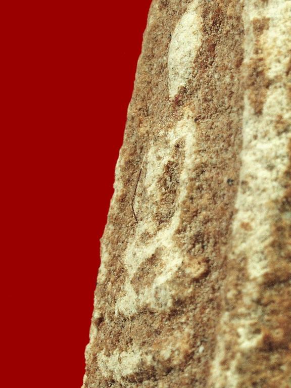 ข้อศึกษาเกี่ยวกับคราบน้ำว่าน ที่ปรากฏบนพระสมเด็จรุ่นสุดท้าย ของหลวงพ่อชาญณรงค์ ปี 2529