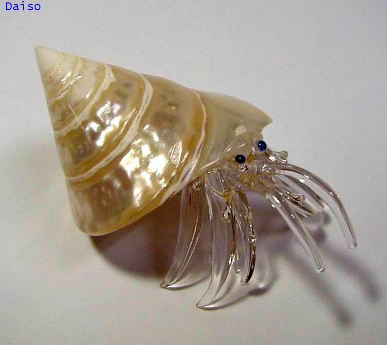 เปลือกหอย ปูเสฉวน รหัส SH Glass 20-L
