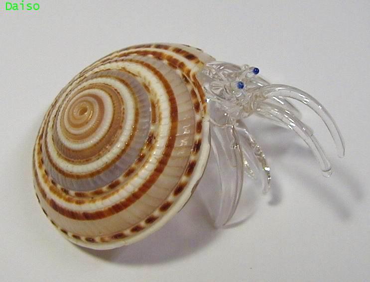 เปลือกหอย ปูเสฉวน รหัส SH Glass 21-M