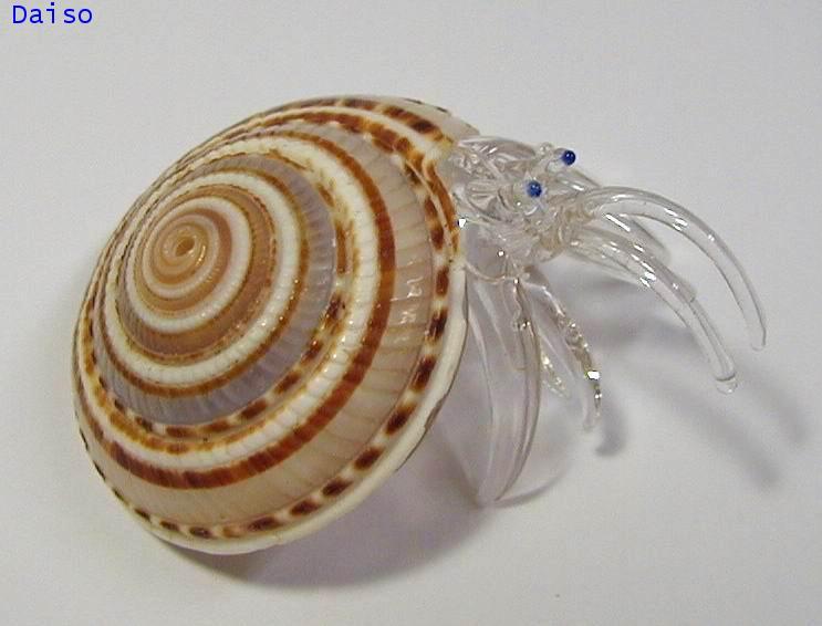 เปลือกหอย ปูเสฉวน รหัส SH Glass 21-L