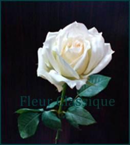 ช่อดอกกุหลาบสีขาว (roses bouquet) 2