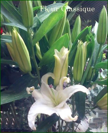 ช่อดอกไม้ขาวส้ม (bouquet) 1