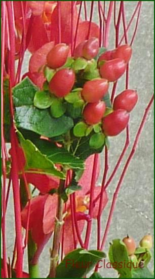 ช่อดอกกุหลาบ(rose bouquet) 1