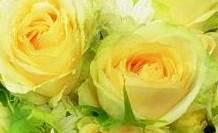 ช่อดอกไม้กุหลาบสีแคนตาลูป(rose bouquet) 1