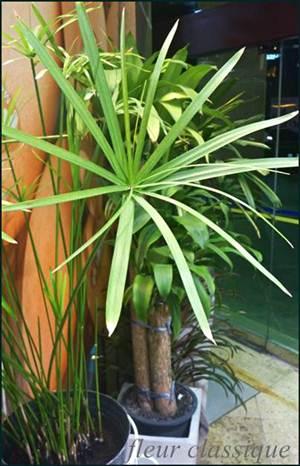 แจกันลิลลี่ (vase lily) 1