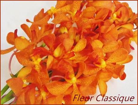 ดอกไม้ในกระเช้า (flower basket) 1