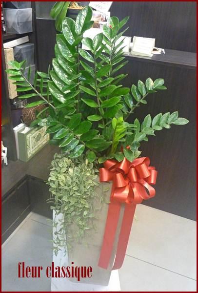 กวักมรกต plant