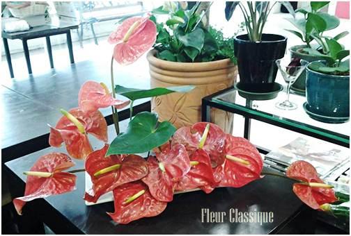 แจกันดอกหน้าวัว vase anthurium