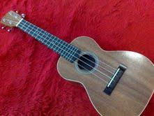 อูคูเลเล่    PLATO (PU1)Concert  ukulele 24quot