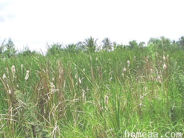 ที่ดินเปล่า คลอง 8 อ.หนองเสือ จ.ปทุมธานี เนื้อที่ 140 ตร.วา