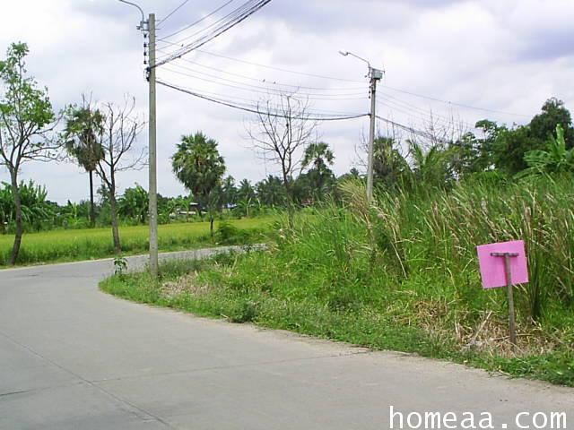ที่ดินเปล่า 229 ตารางวา ต.บางรักพัฒนา อ.บางบัวทอง จ.นนทบุรี ซอยวัดไผ่เหลือง