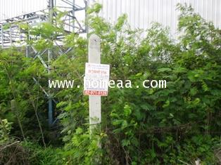 ทาวน์โฮม 3ชั้น (มุม) ม.บ้านกลางเมือง รามอินทรา-วัชรพล เนื้อที่ 19.60 ตร.วา สายไหม พร้อมอยู่ (TH1897) 5