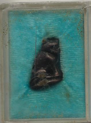 เสือหลวงพ่อปาน วัดมงคลโคธาวาส(บางเหี้ย) พ.ศ.2527
