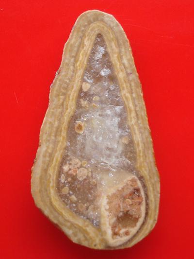 หลวงปู่ทวด แกะจากหอยหินล้านปีทั้งตัว หลวงพ่อทองกลึง วัดเจดีย์หอย ปทุมธานี ปี 2542 แปลกน่าเก็บ 1