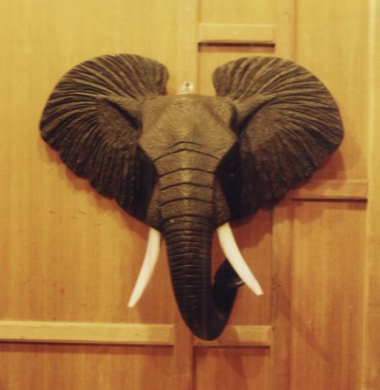 หัวช้างแอฟริกา