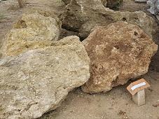 หินฟองน้ำ