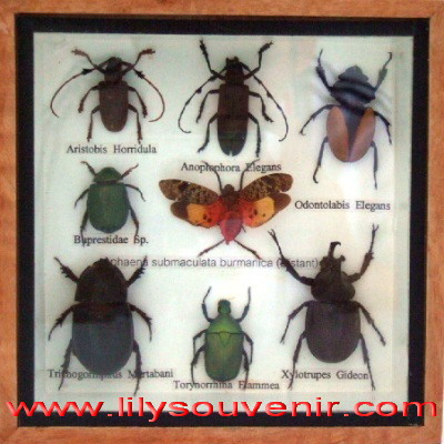 รวมแมลง กล่องเล็ก