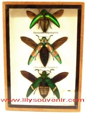 แมลงทับ3ตัว