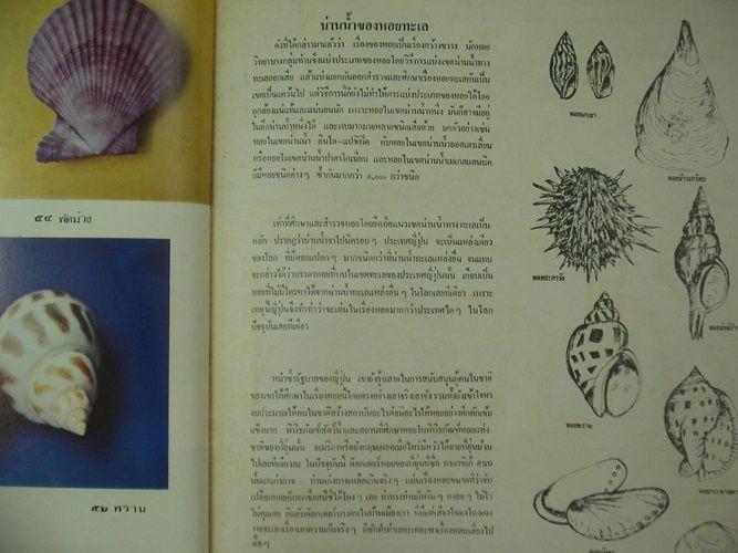 ธรรมชาติศึกษา 3