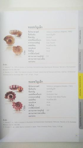 บัญชีรายการทรัพยากรชีวภาพมอลลัสกาในประเทศไทย หอยจิ๋วทะเล 5
