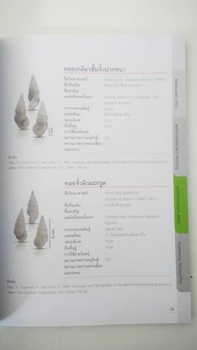 บัญชีรายการทรัพยากรชีวภาพมอลลัสกาในประเทศไทย หอยจิ๋วทะเล 7