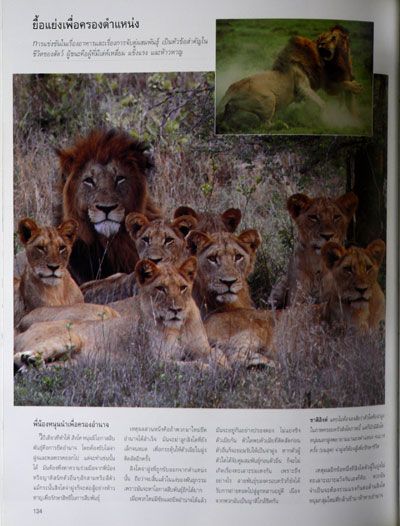 สำรวจชีวิตสัตว์โลกผู้น่าทึ่ง / รีดเดอร์ส ไดเจสท์ 9