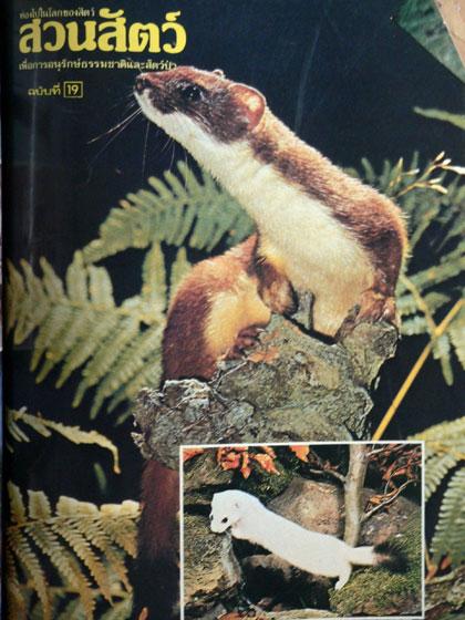 นิตยสารสวนสัตว์ รวมเล่มชุดที่ 2 ฉบับที่ 11 - 20 10