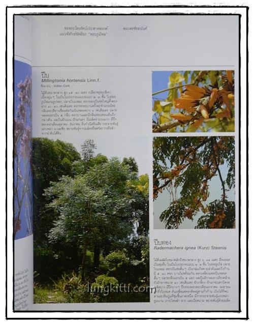 พรรณไม้ในสวนหลวง ร. 9 5