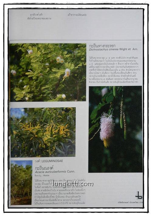 พรรณไม้ในสวนหลวง ร. 9 8