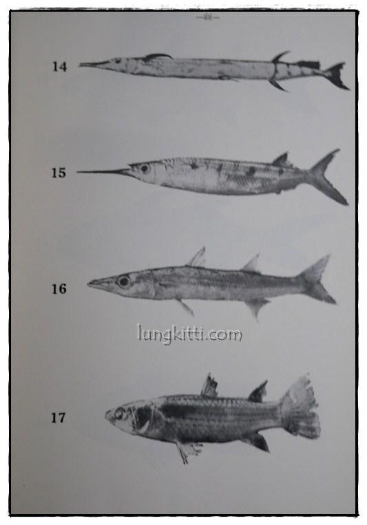 รายงานผลการศึกษาชนิดของปลาและสัตว์น้ำอื่นๆของประเทศไทยทางชายฝั่งมหาสมุทรอินเดีย ฉบับที่ 1 9
