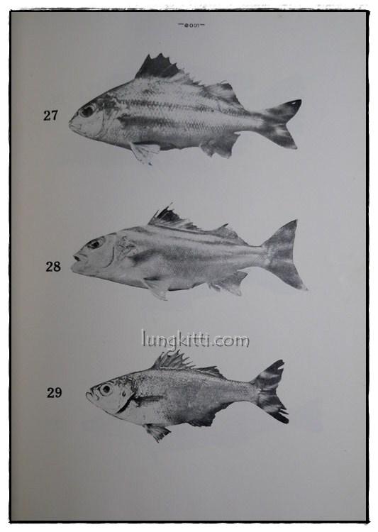 รายงานผลการศึกษาชนิดของปลาและสัตว์น้ำอื่นๆของประเทศไทยทางชายฝั่งมหาสมุทรอินเดีย ฉบับที่ 1 10