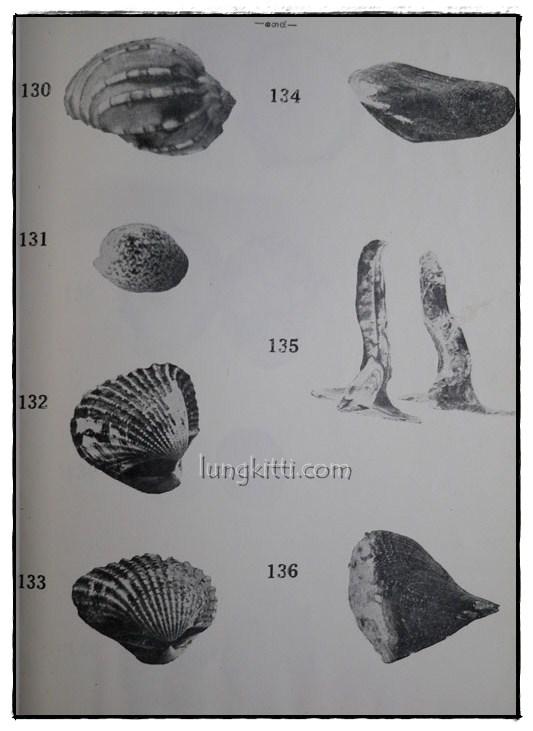 รายงานผลการศึกษาชนิดของปลาและสัตว์น้ำอื่นๆของประเทศไทยทางชายฝั่งมหาสมุทรอินเดีย ฉบับที่ 1 11