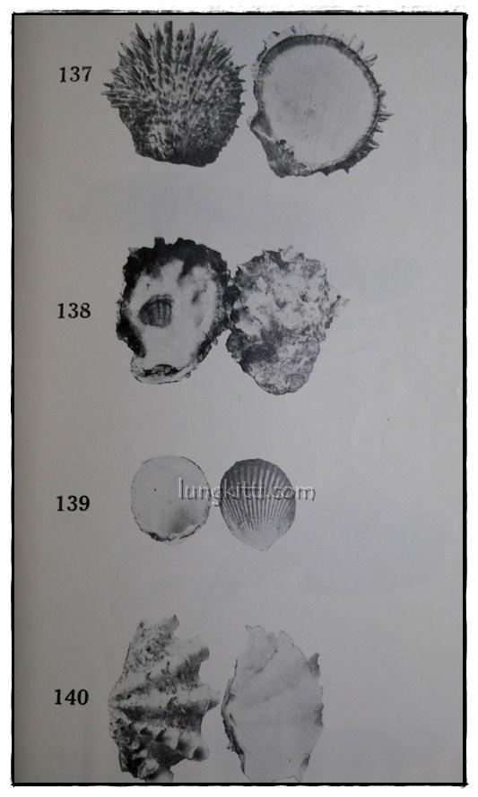 รายงานผลการศึกษาชนิดของปลาและสัตว์น้ำอื่นๆของประเทศไทยทางชายฝั่งมหาสมุทรอินเดีย ฉบับที่ 1 12