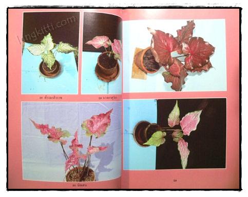 เอกลักษณ์บอนสี เล่ม 2 / คณะ 9 รังบอน 8
