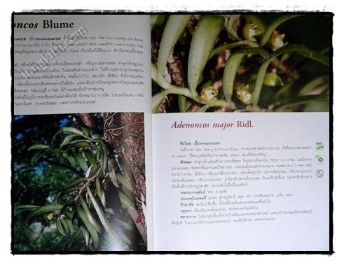 กล้วยไม้ป่าเมืองไทย (เล่ม 2) 3