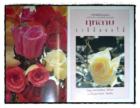 กุหลาบ : ราชินีดอกไม้ 2