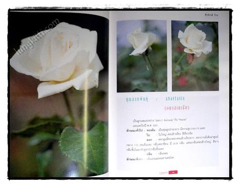 กุหลาบ : ราชินีดอกไม้ 6