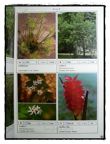 พฤกษาพัน (PLANT MATERIALS IN THAILAND) 6
