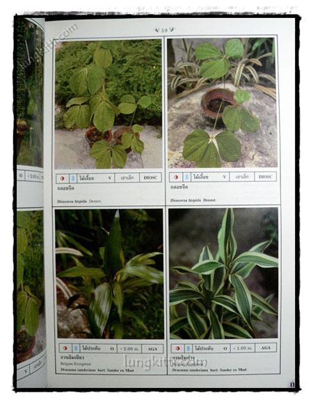 พฤกษาพัน (PLANT MATERIALS IN THAILAND) 3