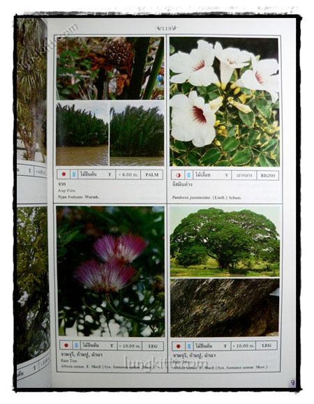 พฤกษาพัน (PLANT MATERIALS IN THAILAND) 7