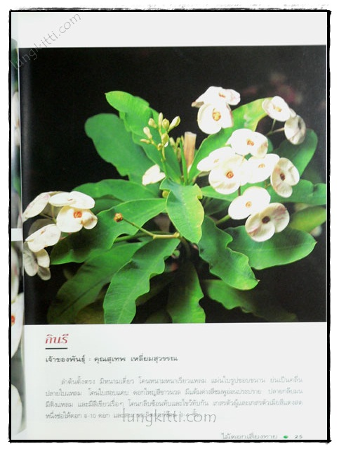 โป๊ยเซียน : ไม้ดอกเสี่ยงทาย (เล่ม 3) 2