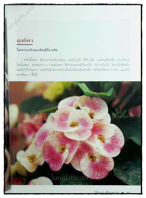 โป๊ยเซียน : ไม้ดอกเสี่ยงทาย (เล่ม 3) 3
