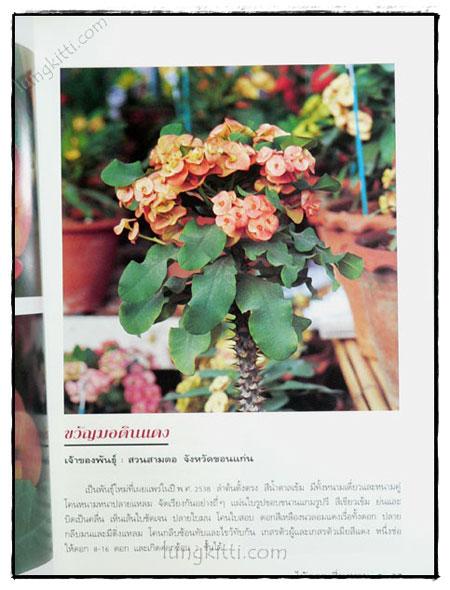 โป๊ยเซียน : ไม้ดอกเสี่ยงทาย (เล่ม 3) 4
