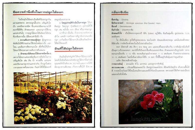ไม้ดอกแสนสวย : ไม้ดอกไม้ประดับ 3