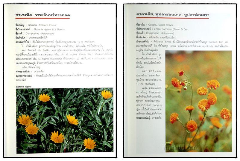 ไม้ดอกแสนสวย : ไม้ดอกไม้ประดับ 4