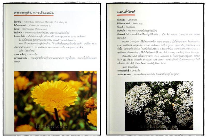 ไม้ดอกแสนสวย : ไม้ดอกไม้ประดับ 5