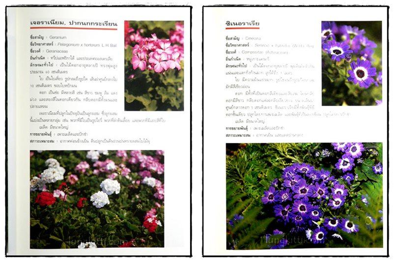 ไม้ดอกแสนสวย : ไม้ดอกไม้ประดับ 6